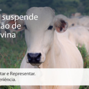 Call Export fala sobre a proibição de exportação da carne bovina para a China. Juliana Amorim on Unsplash.